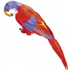 Papoušek Barva: červená